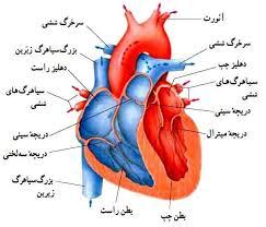 پاورپوینت بررسی بیماری های مادرزادی قلب